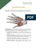 Musculos_de_la_mano