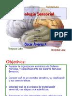 Fisiología Sensorial Oscar