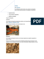Los Artrópodos y Sus Características