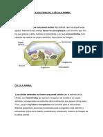 Célula Vegetal y Célula Animal