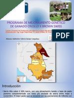 Programa de Mejoramiento Genetico Brown Swiss