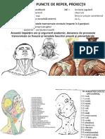 Anatomia Topografica a Gitului
