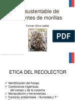 Uso Sustentable de Ambientes de Morilla