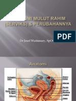 anatomi servik