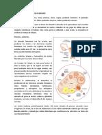 2.5 Sistema Reproductor Femenino
