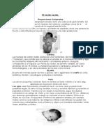 Anatomia Recien Nacido