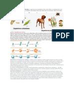 Animales Pluricelulares y Unicelulares