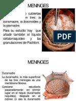 meninges-130809165539-phpapp01(1)