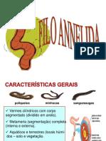 9 Filo Annelida