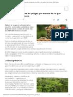 Salvar a Las Especies en Peligro Por Menos de Lo Que Gastamos en Refrescos - BBC Mundo