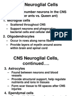 Neuroglial Cells and Neurons
