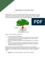 Atributiile Departamentului de Resurse Umane