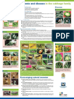Managing Insect Pests and Disease in the Cabbage Family_poster