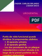 UROGENITAL.ppt
