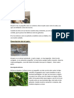 88487448-Descripcion-de-mi-perro.docx