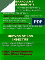 desarrollo-y-metamorfosis.pdf