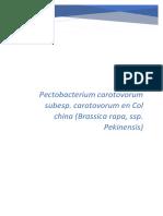 Monografia Pectobacterium Final