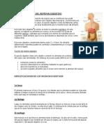 Especificaciones Del Sistema Digestivo