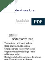 Sorte Vinove Loze (1)