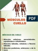 02MÚSCULOS DELCUELLO.pptx