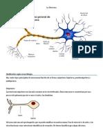 La Neuronas  tipos