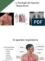 Apara respiratorio