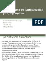 Metabolismo de Acilgliceroles y Esfingolípidos