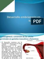 Desarrollo Embrionario en Humanos
