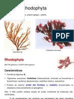 AULA 4- Rhodophyta