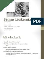 Final FeLV Presentation