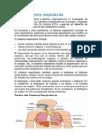 El sistema respiratorio.docx