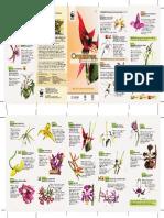 07_Guia_orquideas.pdf