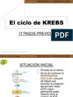 Ciclo de Krebs Mcm