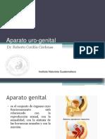 Genito Urinario (Ok)
