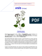 Anis - Anise