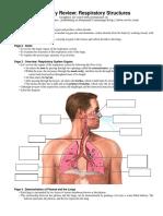 Anatomy Review Respiratory