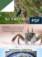 Biodiversidad-Semana y Grupo 7 c2 Los Guerreros