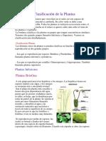 Clasificación de La Plantas