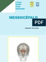 Mesencéfalo 1