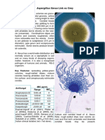 Morfologi lengkap aspergillus flavus