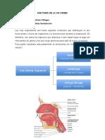 Articulo1 Anatomia de La via Aerea Dr Hector Martinez