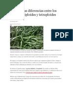 Aprenda Las Diferencias Entre Los Ryegrass Diploides y Tetraploides