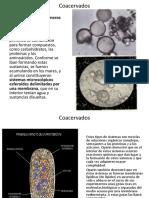 Presentacion_2_Coacervados