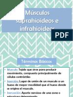 Musculos Suprahioideos e Infrahioideos