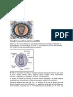 VIH (Autoguardado).rtf