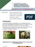 origenes de plagas y enfermedades.pptx