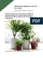 Las Mejores Plantas Para Purificar El Aire de Tu Casa
