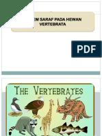 Sistem Saraf Pada Vertebrata1