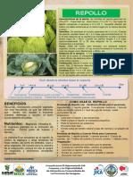 02_Repollo.pdf