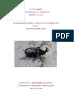 2004Makrigiannaki.pdf